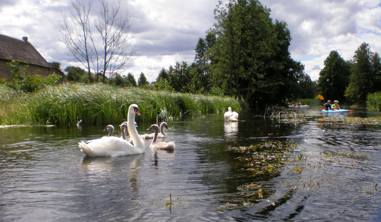 Relaxing weekend at Czarna Hańcza River