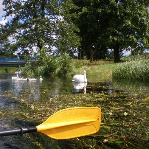 river in podlasie poland - kayak and swans