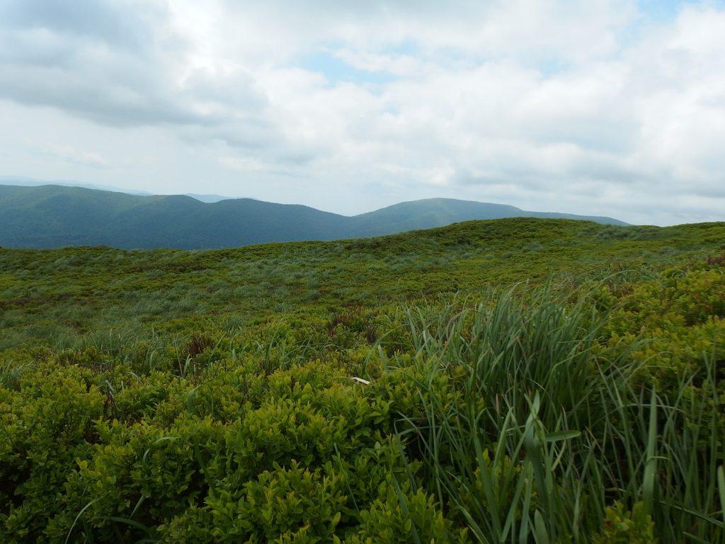 bieszczady mountains carynska polonyna