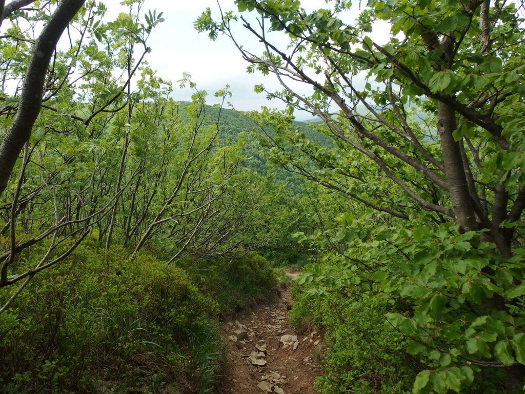bieszczady mountains wielka rawka