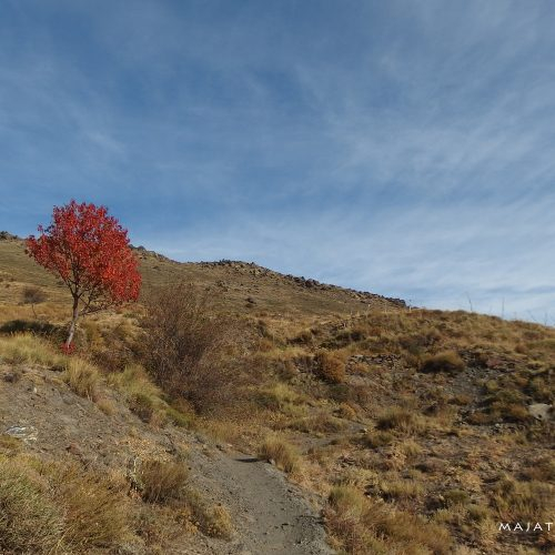 sierra nevada mountains in spain - autumn tree