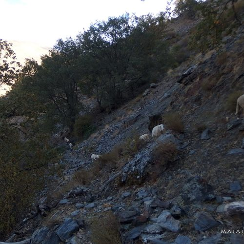sierra nevada mountains in spain - hiking with sheeps