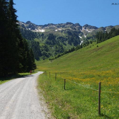 kitzhubel alps alpbach