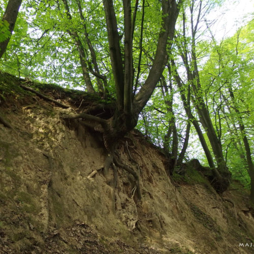 lublin voivodeship loess gully
