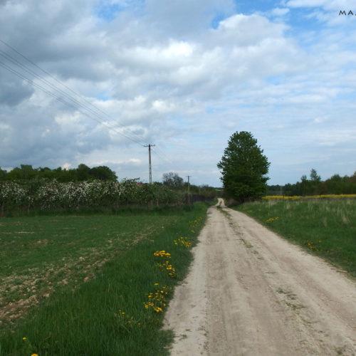 lublin voivodeship field