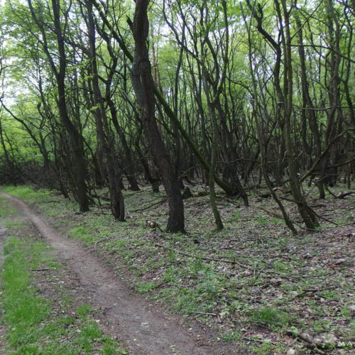 lublin voivodeship forest
