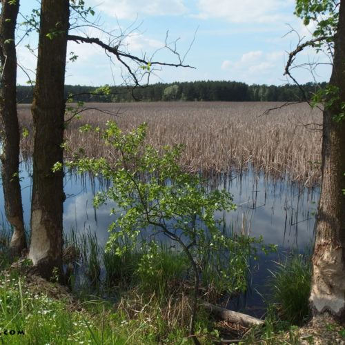 lublin voivodeship nature reserve piskory