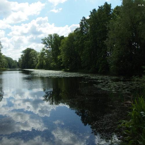 Puławy nature reserve łęg na kępie