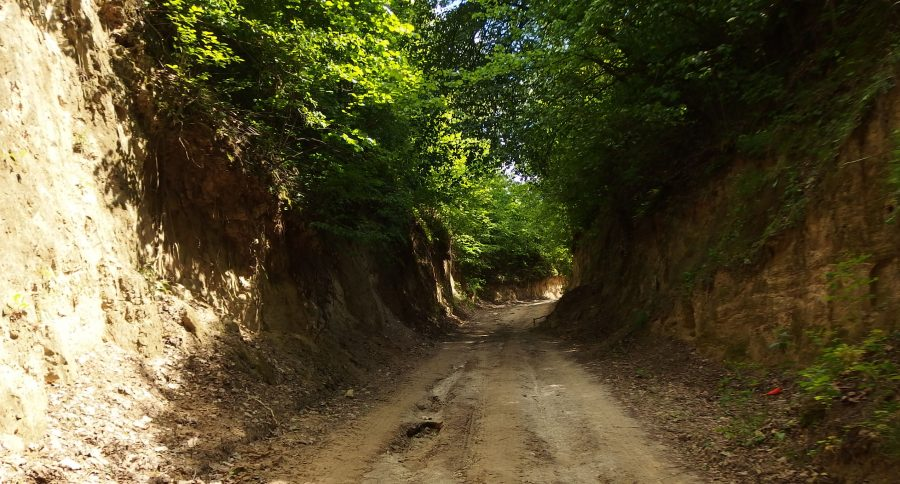 loess gully close to kazimierz dolny in poland