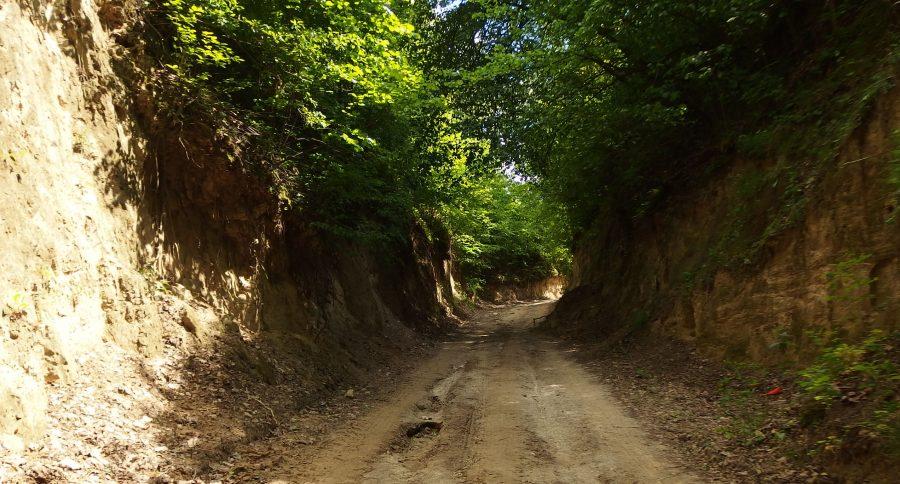 loess gully close to kazimierz dolny in poland