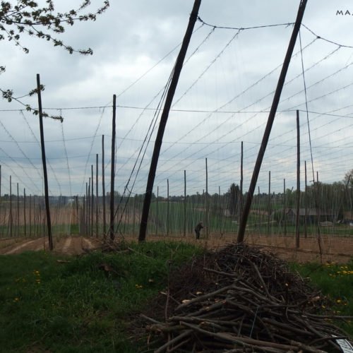 lublin voivodeship hops cultivation
