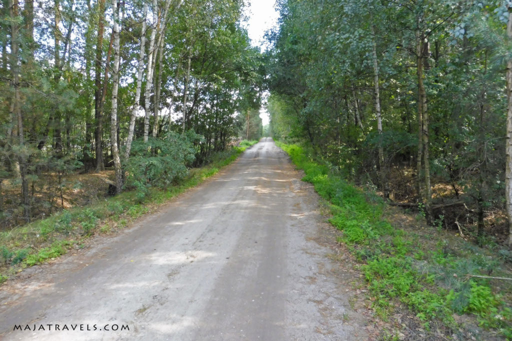droga leśna w mdzewie