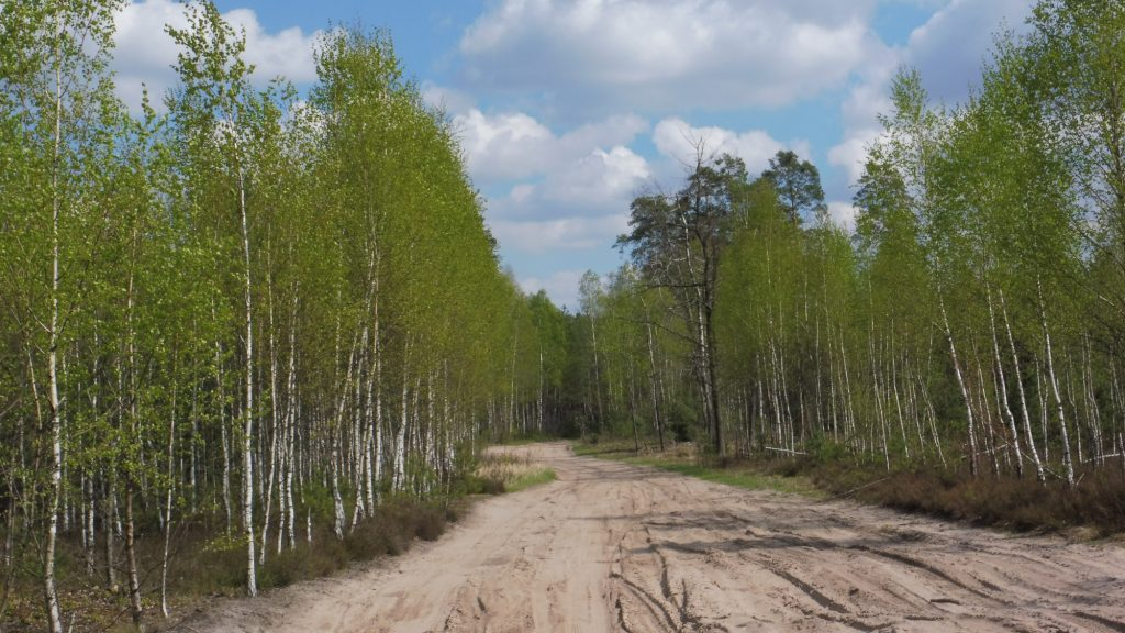 nadbużański szlak rowerowy, las