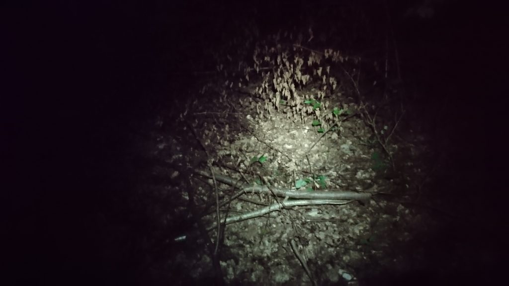 trasa rowerowa krwawa pętla, lasy sękocińskie