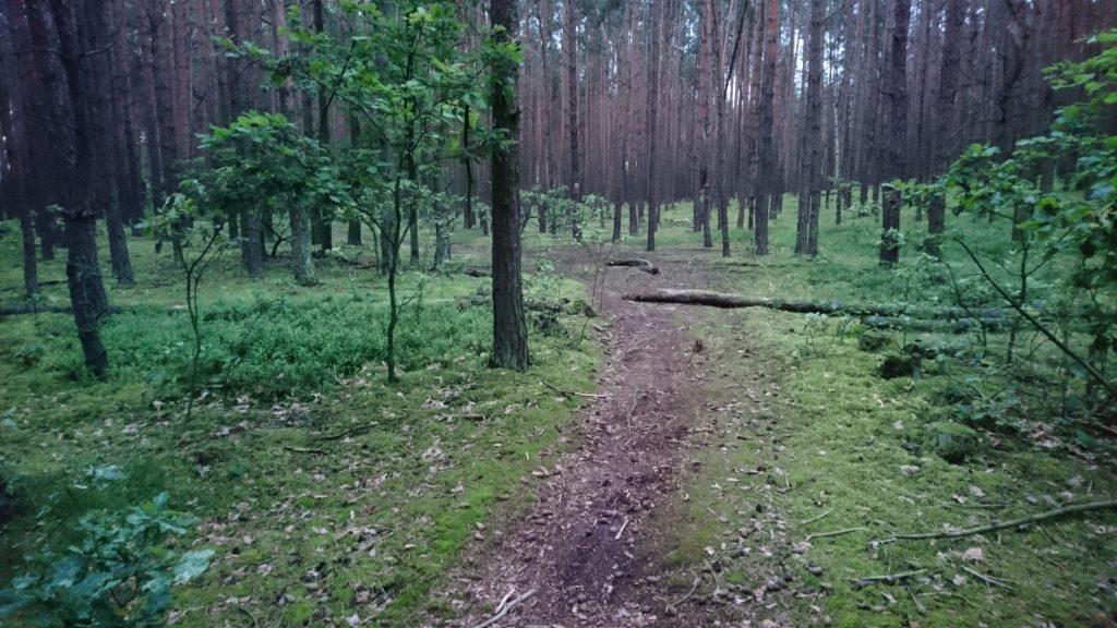 trasa rowerowa krwawa pętla, las