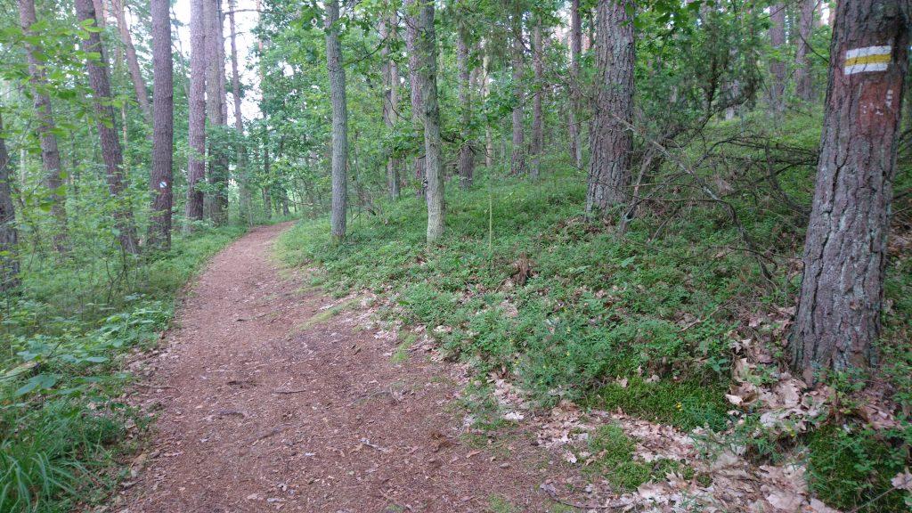 kampinoski park narodowy na rowerze, krwawa pętla, żółty szlak