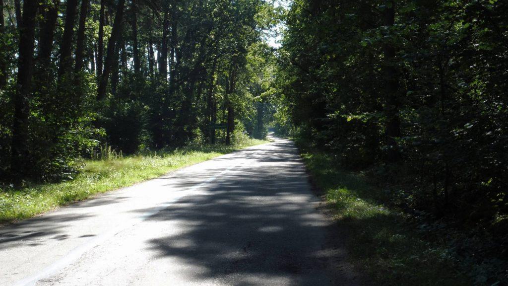 leśna asfaltowa droga, nadbużański szlak rowerowy