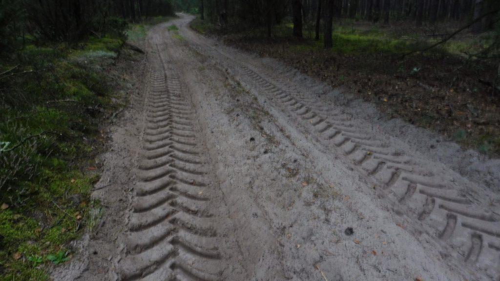 nadbużański szlak rowerowy, droga leśna