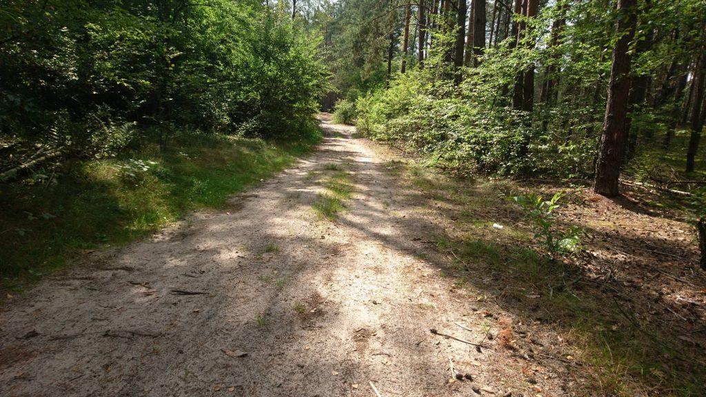 droga leśna, nadbużański szlak rowerowy