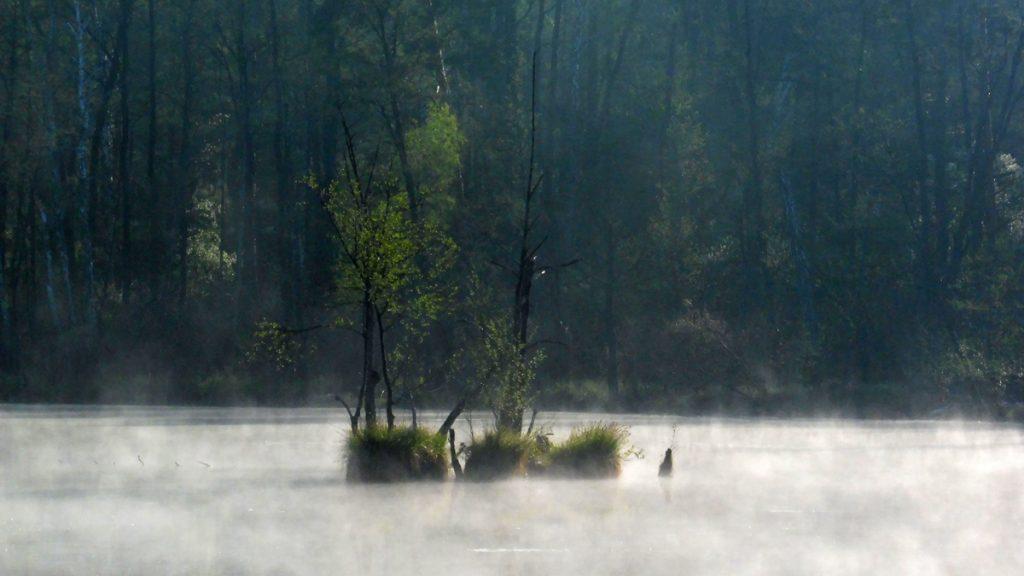 jezioro torfy, mazowiecki park krajobrazowy