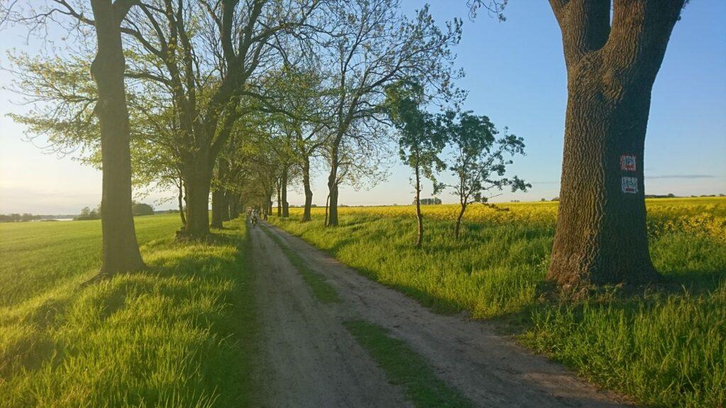 szlak rowerowy wzdłuż jeziora niepruszewskiego
