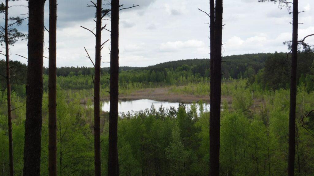 widok z wieży widokowej przy jeziorze linkowo