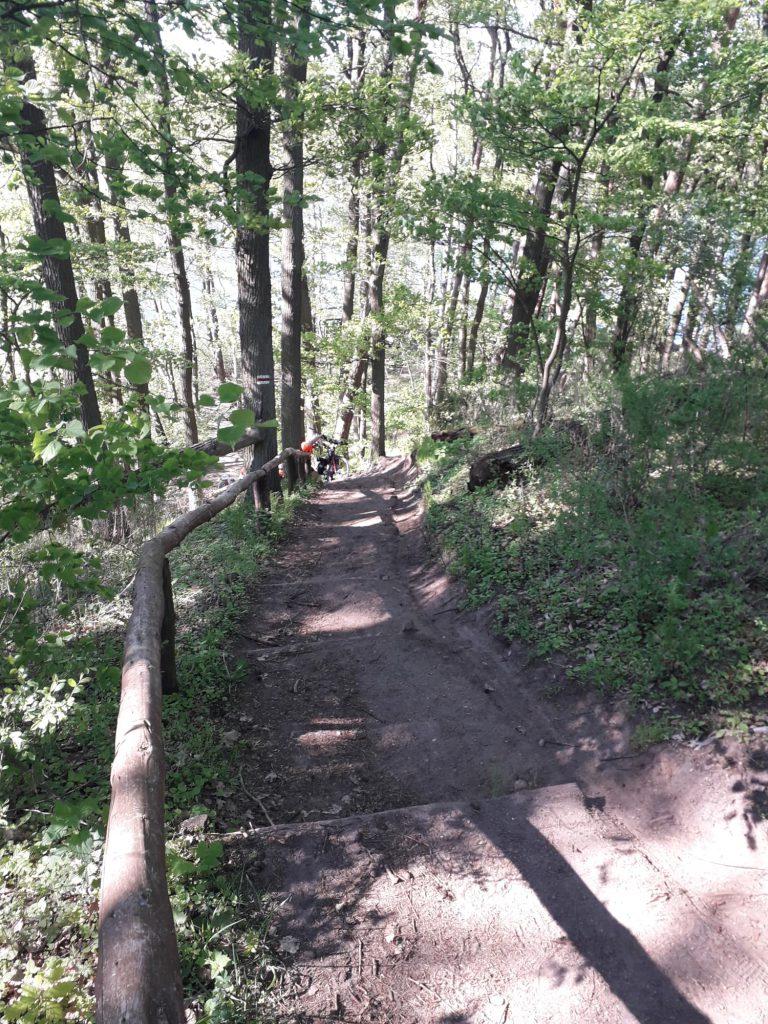 schody w wielkopolskim parku narodowym